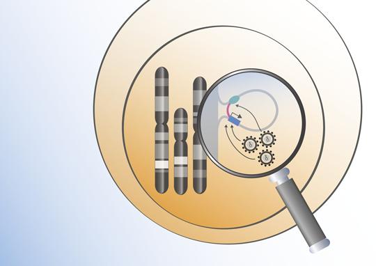 Retroviren integrieren sich an besonders aktiven Stellen im Erbgut. NCT-Wissenschaftler konnten so die Schaltstellen im Genom blutbildender Stammzellen ermitteln. Quelle: Peer Wünsche