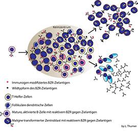 Stimulation der Krebszellen mit modifiziertem BZR-Antigen (© Lorenz Thurner)