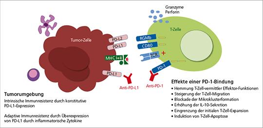Abb. 1: Immunsuppressive Wirkung der PD-1-Rezeptor-Bindung auf T-Zellen.