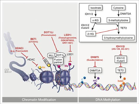 Abb. 1: Neue Therapieansätze epigenetischer Regulatoren (3).