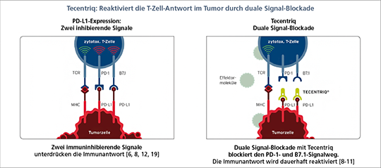 Tecentriq-Reaktiviert_T-Zell-Antwort_im_Tumor