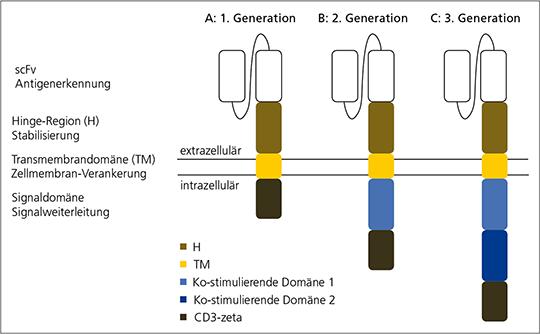 Aufbau eines chimären Antigenrezeptors