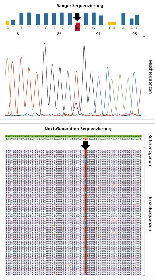 Abb. 2: Sanger-Sequenzierung im Vergleich zum NGS.