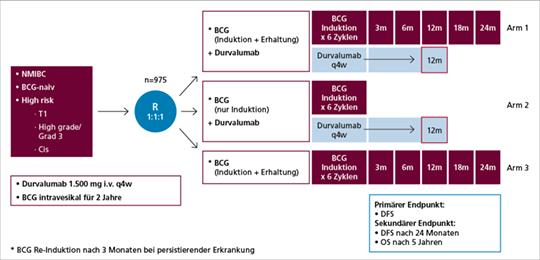 Abb. 2: Studiendesign der POTOMAC-Studie, einer randomisierten, offenen, multizentrischen globalen Phase-III-Studie (NCT03528694) (mod. nach (6)).