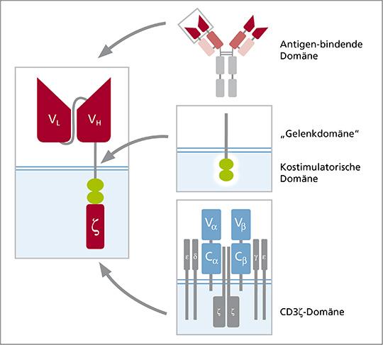 Abb. 1: Aufbau chimärer Antigenrezeptoren