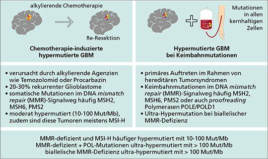 Chemotherapie-induzierte und Keimbahn-assoziierte Hypermutation