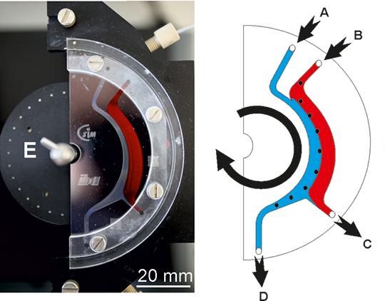 Abb. 2: Zellseparator. Die Blutprobe wird durch den Eingang (B) in den Chip gepumpt. Die Zielzellen werden entlang des rotierenden Magnetfelds (E) in die Pufferphase abgelenkt und in (D) gesammelt. © iba Heiligenstadt