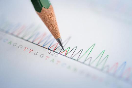 Hochspezifische Diagnostik per DNA-Sequenzierung: Ganz bestimmte Merkmale im Erbgut der Patienten weisen auf eine Sichelzellanämie hin. ©Universitätsklinikum Heidelberg