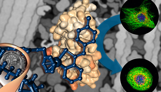 Mit Plecstatin wurde ein Wirkstoff gefunden und charakterisiert, das als neuartiges maßgeschneidertes Medikament für die Krebstherapie eingesetzt werden könnte. © Christopher Gerner/Wiley-VCH