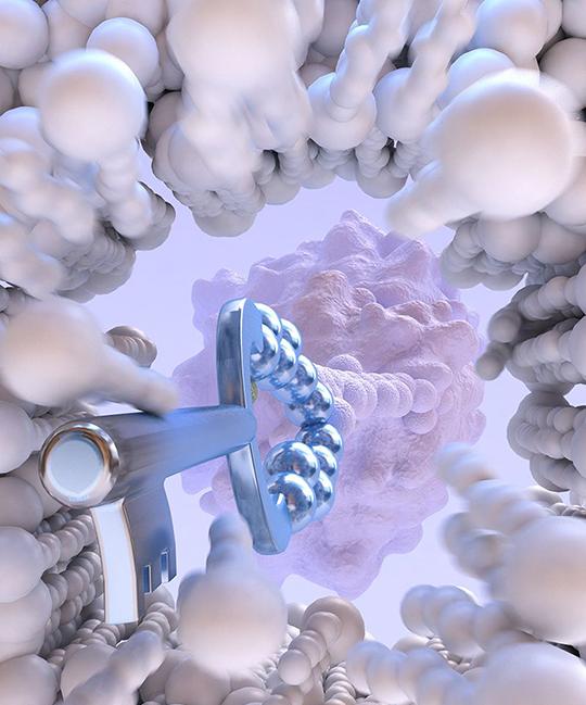 Zyklisch zellpenetrierende Peptide ebnen für die Antikörper den Weg ins Innere einer Zelle. © Christoph Hohmann, Nanosystems Initiative Munich (NIM)