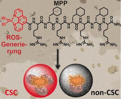 Neues Metallopeptid leitet programmierten Zelltod bei Brustkrebs-Stammzellen ein. (c) Wiley-VCH