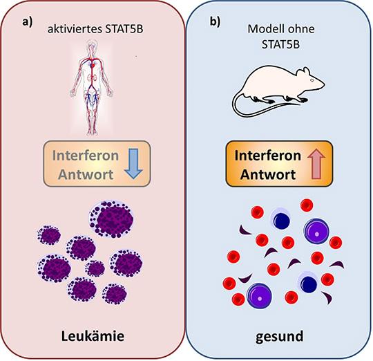 STAT5B als Angriffspunkt für Krebstherapeutika (© Institut für Pharmakologie und Toxikologie/Vetmeduni Vienna)