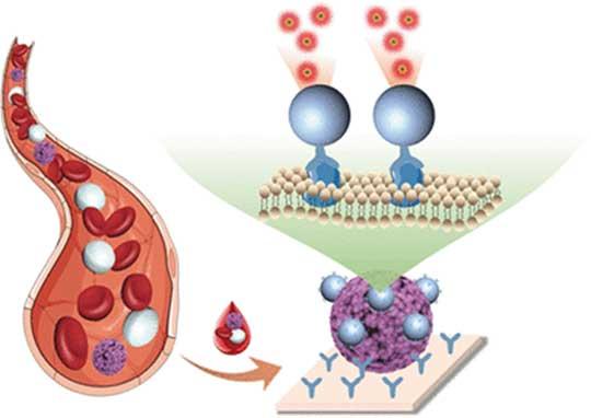 Bild von im Blut zirkulierenden Tumorzellen
