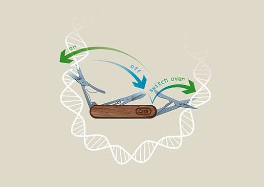 CRISPR-Switch-Technologie (©IMBA/Kaminski Grafik)