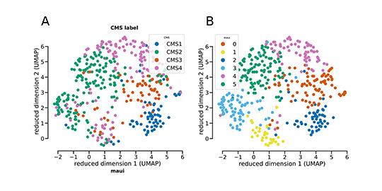 Proben von Darmkrebstumoren kann man – gemäß der Genexpression – in 4 Standard-Subtypen einordnen. Die Plattform maui hat die Proben ähnlich klassifiziert. Allerdings gibt es nun Hinweise darauf, dass Subtyp 2 (in grün, Abb. A) eigentlich in 2 Subtypen unterteilt werden müsste (grün und hellblau in Abb. B). (© Akalin Lab, MDC)