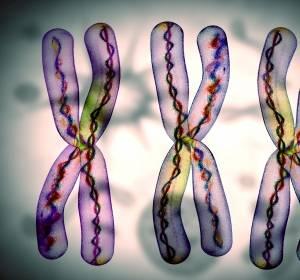 Tumorsuppressor-Gen TP53 entscheidender Biomarker für Hochrisiko-Patienten mit CLL