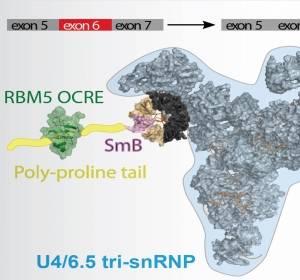 Anaylsen zu Fehlregulationen bei Proteininteraktionen