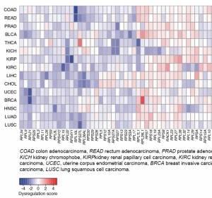 Expressionsmuster in Tumorzellen als prognostischer Marker