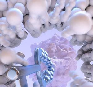 Zellgängige Nanobodies zeigen Interaktion zwischen dem Tumorhemmer p53 und Protein HDM2