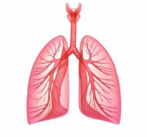 Checkpoint-Blockade jetzt auch beim kleinzelligen Lungenkarzinom erfolgreich