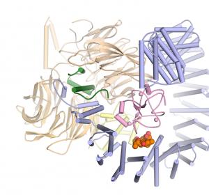 Wie sich Pladienolid B an SF3B anlagert und dessen Funktion stört