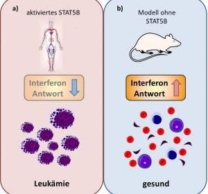 Neuer Behandlungsansatz gegen Leukämien