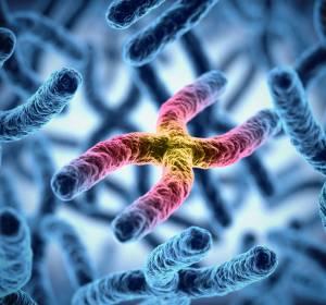 Systematische Untersuchung von RAG-Mutationen