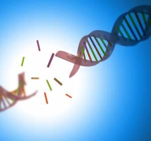 ERC Synergy Grant für ambitioniertes Forschungsvorhaben zum Thema DNA-Damage-Response/DNA-Reparatursysteme