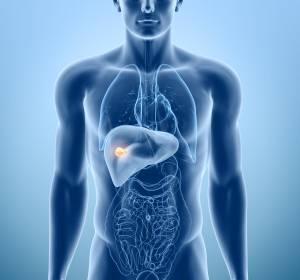Lebertumoren: Tomoelastografie ermöglicht präzise Bestimmung der Gewebeeigenschaften