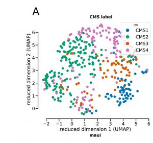 CRC: Deep Learning erkennt molekulare Muster