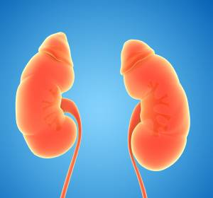 Transplantierte Nieren: Strukturmerkmale entdeckt, die auf Abstoßung hinweisen