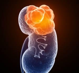 Phase-I/II-Studie: HIF-2α-Inhibitor MK-6482 zeigt Aktivität bei schwer vorbehandelten Patienten mit klarzelligem RCC