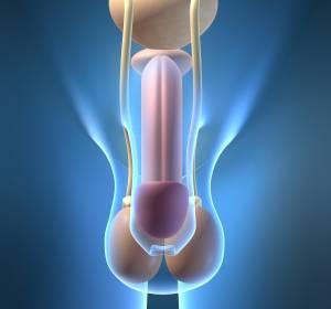 Peniskarzinom: S3-Leitlinie zu Plattenepithelkarzinom der Eichelhaut oder des inneren Vorhautblattes