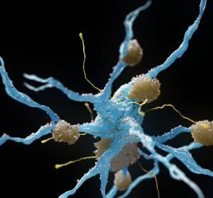 Aktuelle Daten zum Einsatz von Entrectinib bei soliden und ZNS-Tumoren