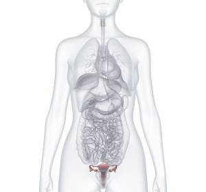Onkologie+VirtuOS%3A+Therapie+des+rezidivierten+Ovarialkarzinoms+%E2%80%93+ausgew%C3%A4hlte+ASCO-Highlights