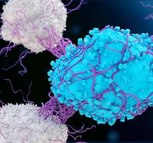 Lymphome: Entwicklung von Chemotherapie-freien Behandlungen