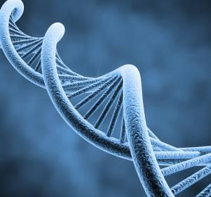 Polycythaemia vera: Die Bestimmung einzelner DNA-Varianten ermöglicht eine effektivere Behandlung