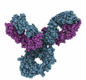 Neuer Anti-ILT4-Antikörper zeigt in Kombination mit Pembrolizumab erste vielversprechende Ergebnisse bei fortgeschrittenen Tumoren