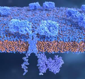 r/r Mantelzell-Lymphom: CAR-T-Zelltherapie zeigt anhaltenden klinischen Benefit