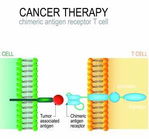 r/r DLBCL: Vielversprechende erste Daten zur CAR-T-Zell-Therapie mit Tisagenlecleucel in Kombination mit Ibrutinib