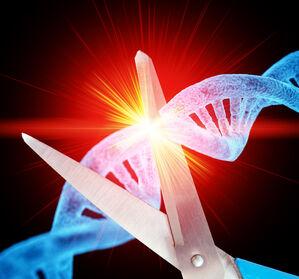 AML%3A+Eignet+sich+miRNA-Expression+als+Biomarker+f%C3%BCr+Risiko-Subgruppen%3F