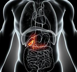 Hepatozellul%C3%A4res+und+Bili%C3%A4res+Karzinom%3A+S3-Leitlinienempfehlungen