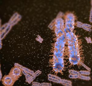Ki-67 verhindert Zusammenkleben der Chromosomen während der Mitose