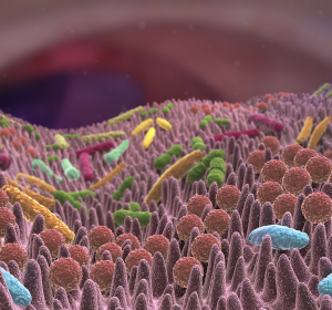 Mikrobiom reguliert Immunsystem