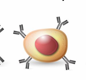 Klassisches Hodgkin-Lymphom charakterisiert durch PD-L1/PD-L2 Veränderungen