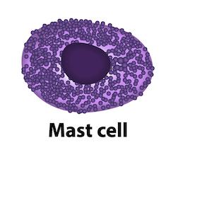 Fortgeschrittene systemische Mastozytose: 60% Ansprechen auf Midostaurin