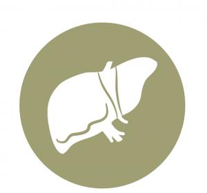 Regorafenib verbessert Gesamtüberleben von HCC-Patienten