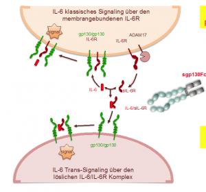 IL-6-Inhibitor sgp130Fc offenbar gegen Lungenkrebs wirksam