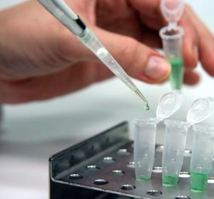 Neuartiger Behandlungsansatz – Onkolytische Viren zur Krebstherapie