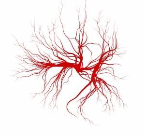 Blutgefäße können Tumorwachstum auch eindämmen